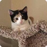 Adopt A Pet :: Gemma - Mount Laurel, NJ