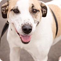 Adopt A Pet :: Rudy - St Louis, MO