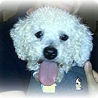 Adopt A Pet :: Jaxon - Sinking Spring, PA