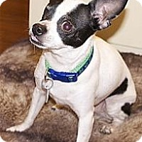 Adopt A Pet :: ZEEK - AUSTIN, TX