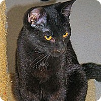 Adopt A Pet :: Darwyn - Victor, NY