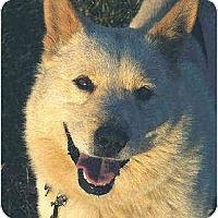 Adopt A Pet :: Blondie - Southern California, CA