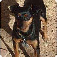 Adopt A Pet :: Zachary - Phoenix, AZ