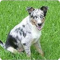 Adopt A Pet :: Hobie - Orlando, FL