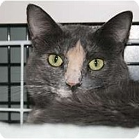 Adopt A Pet :: Princess Kitty - Frederick, MD