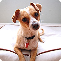 Adopt A Pet :: Riley- I am a LOVE BUG! - Redondo Beach, CA