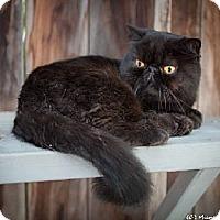Adopt A Pet :: Fredo - Davis, CA