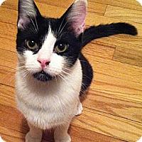 Adopt A Pet :: SINBAD - Springfield, PA