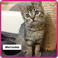 Adopt A Pet :: Mercedes - Miami, FL