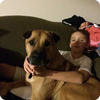 Adopt A Pet :: Fathead - La Crosse, WI