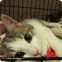 Adopt A Pet :: Bailey - Acme, PA