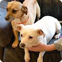 Adopt A Pet :: Maggie & Kaycee - Enfield, CT