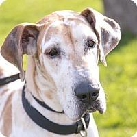 Adopt A Pet :: Cheatah - Brookfield, WI