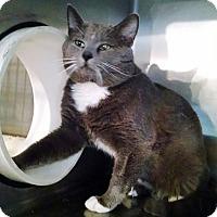 Adopt A Pet :: Drake - Geneseo, IL