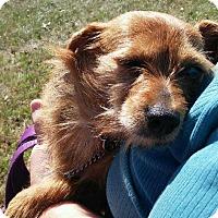Adopt A Pet :: Misty - Westport, CT