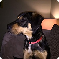 Adopt A Pet :: Dana - Manhasset, NY
