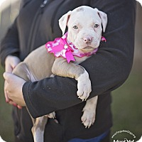 Adopt A Pet :: Tessa - Houston, TX