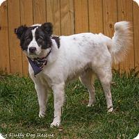 Adopt A Pet :: Gilbert - Enfield, CT