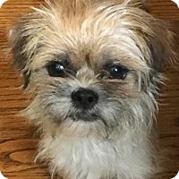 Adopt A Pet :: Janet - Boulder, CO