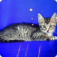 Adopt A Pet :: Curtis - Carencro, LA