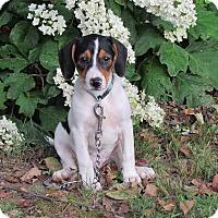 Adopt A Pet :: DOLLY - Bedminster, NJ