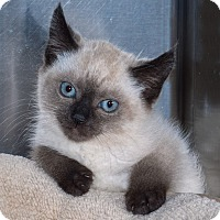 Adopt A Pet :: Abby, Allie, & Austin - Elmwood Park, NJ