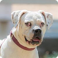 Adopt A Pet :: FRIDA - pasadena, CA