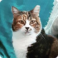 Adopt A Pet :: Bjork - Toronto, ON