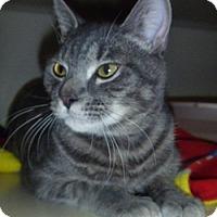 Adopt A Pet :: Rigby - Hamburg, NY