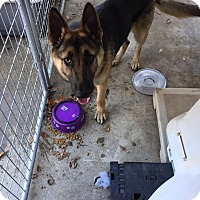 Adopt A Pet :: ALI - Gustine, CA