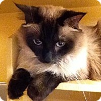 Adopt A Pet :: Zoey - Foothill Ranch, CA
