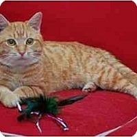 Adopt A Pet :: Liam - Reston, VA