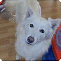 Adopt A Pet :: Aurora - Scottsdale, AZ