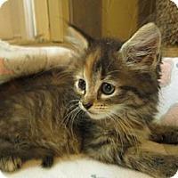 Adopt A Pet :: Siera - Richland, MI