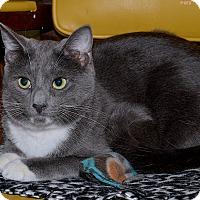 Adopt A Pet :: Katniss - Medina, OH