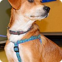 Adopt A Pet :: Flip - Horn Lake, MS