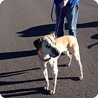 Adopt A Pet :: King - Cedaredge, CO
