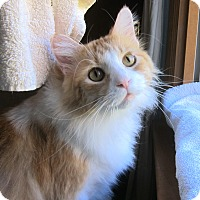 Adopt A Pet :: Riley (great with kids) - Roseville, MN