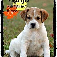 Adopt A Pet :: Banjo Adoption pending - Manchester, CT