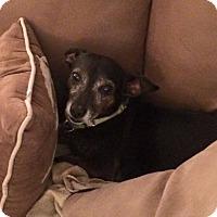 Adopt A Pet :: Oskar - Woodstock, GA