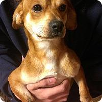 Adopt A Pet :: SAM - Snellville, GA