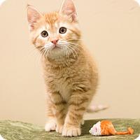 Adopt A Pet :: Rebel - Chicago, IL