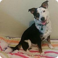 Adopt A Pet :: Geo - New York, NY
