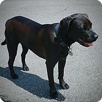 Adopt A Pet :: Bayou - Marietta, GA
