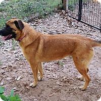 Adopt A Pet :: Luci - Roanoke, VA