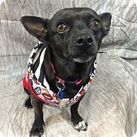 Adopt A Pet :: Maya - Lake Elsinore, CA