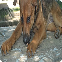 Adopt A Pet :: Tori in CT - Manchester, CT