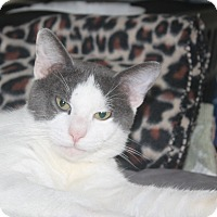 Adopt A Pet :: Thomas - New Port Richey, FL