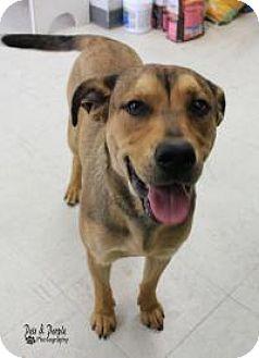 Shepherd (Unknown Type) Mix Dog for adoption in Yukon, Oklahoma - Woody
