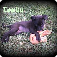 Adopt A Pet :: Tonka - Denver, NC
